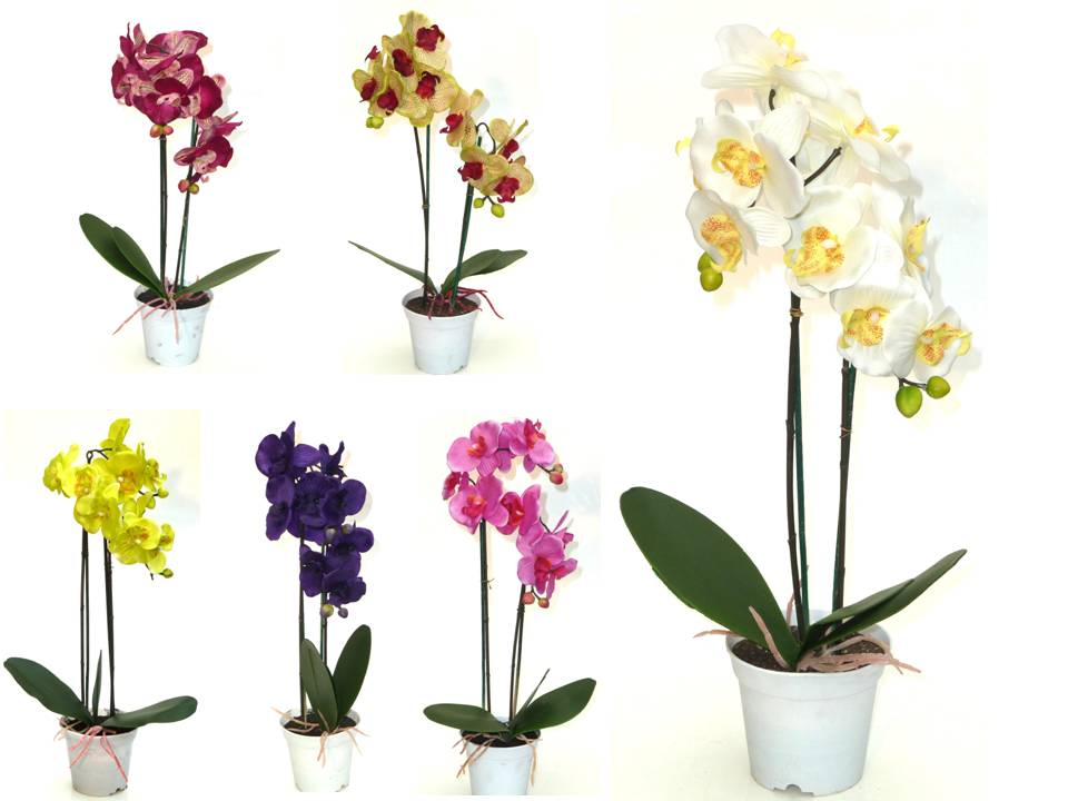 orchidee im topf h50cm orchideen kunstblume topforchidee. Black Bedroom Furniture Sets. Home Design Ideas